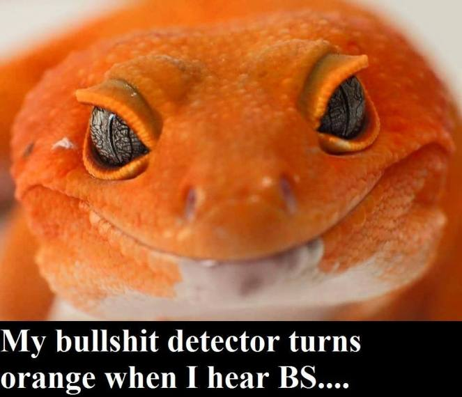 BS Detector.jpg